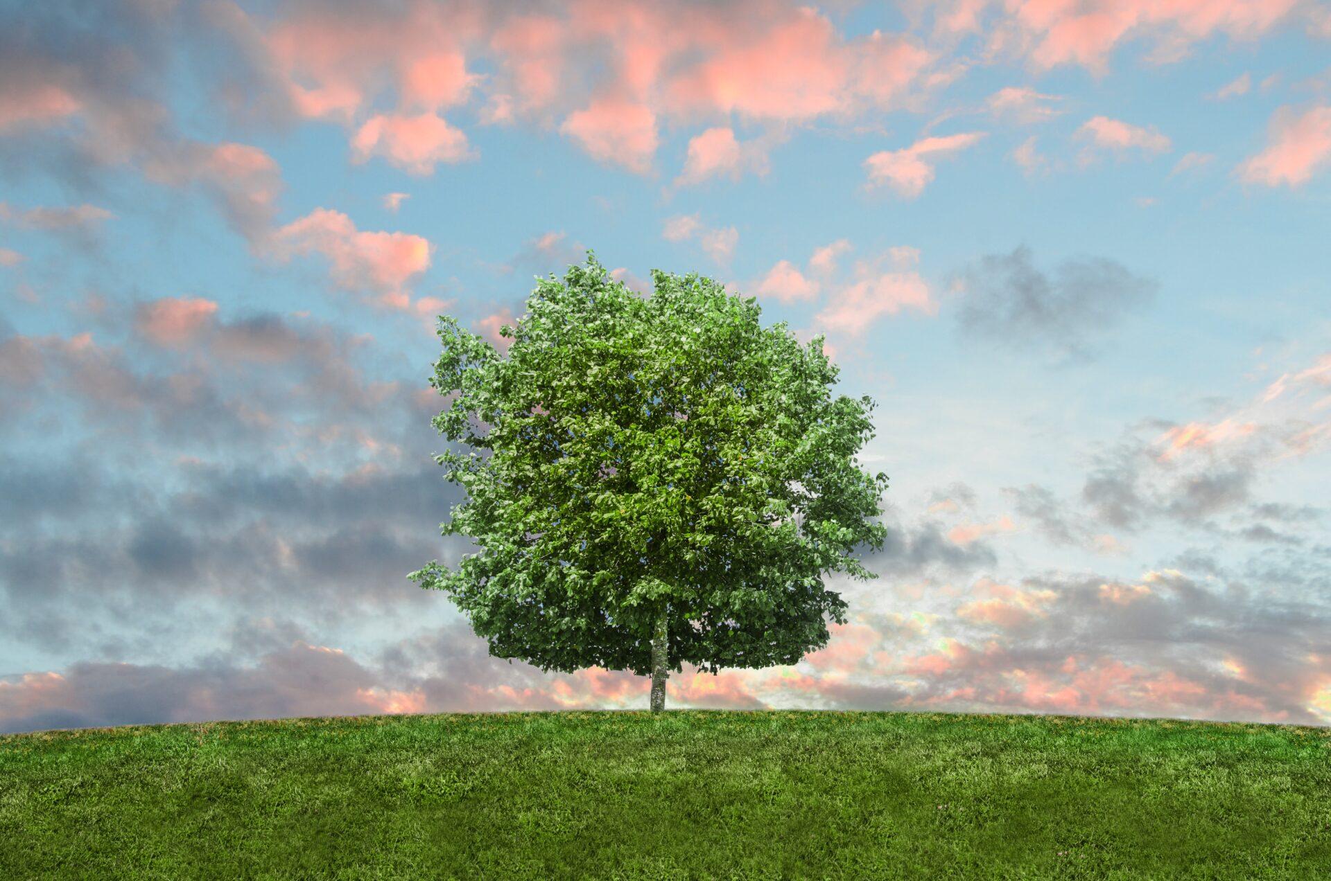 nature-sky-clouds-field-9198